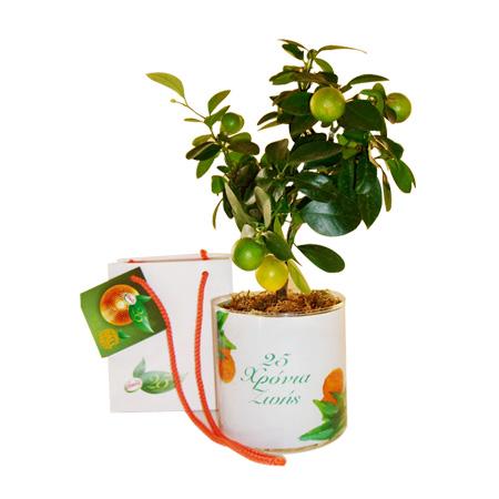 γυάλινο βάζο-glass vase how to plan-fleria corporate gift-εταιρικά δώρα amita