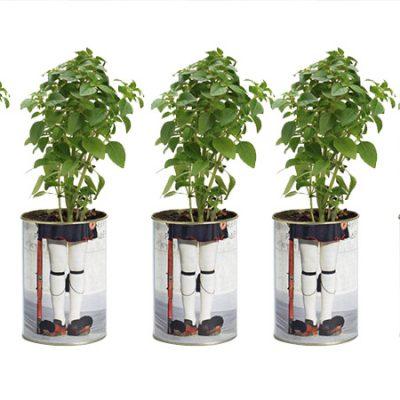 βότανα-σε-κουτί-greek-herbs-in-a-can-herbs-βότανα-βασιλικός-basil-how-to-plan-fleria-corporate-gift-εταιρικά-δώρα-greek-aroma-άρωμα-ελλάδας3