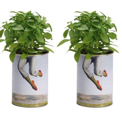 βότανα-σε-κουτί-greek-herbs-in-a-can-herbs-βότανα-βασιλικός-basil-how-to-plan-fleria-corporate-gift-εταιρικά-δώρα-greek-aroma-άρωμα-ελλάδας4.