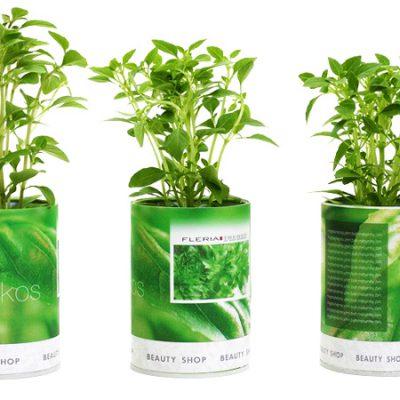 βότανα-σε-κουτί-greek-herbs-in-a-can-herbs-βότανα-βασιλικός-basil-how-to-plan-fleria-corporate-gift-εταιρικά-δώρα-greek-aroma-buety-shop.
