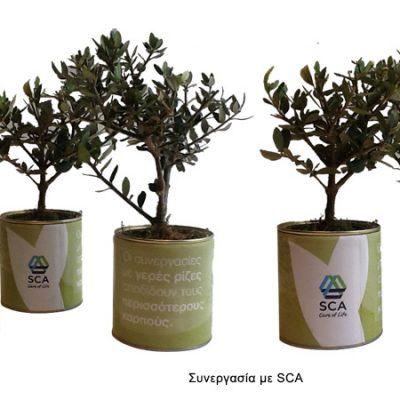 βότανα-σε-κουτί-greek-herbs-in-a-can-herbs-βότανα-how-to-plan-fleria-corporate-gift-εταιρικά-δώρα-SCA
