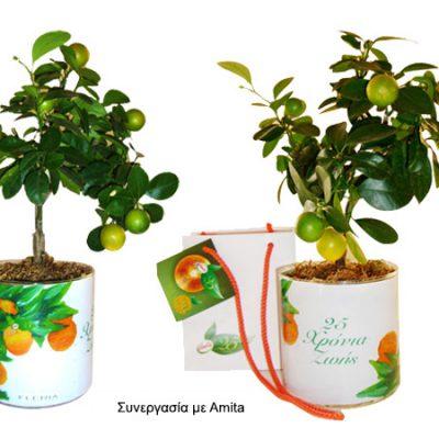 γυάλινο-βάζο-glass-vase-how-to-plan-fleria-corporate-gift-εταιρικά-δώρα-amita1