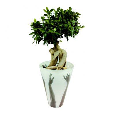 bonsazi-xeria