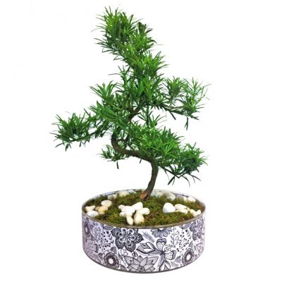 b&w-gyalini-piatela-me-bonsai