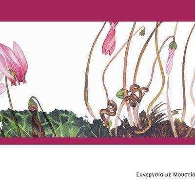 fleria cyclamen-κυκλάμινο-βότανα-σε-κουτί-greek-herbs-in-a-can-herbs-βότανα-how-to-plan-fleria-corporate-gift-εταιρικά-δώρα-greek-aroma-goulandris-museum-μουσείο-γουλανδρή