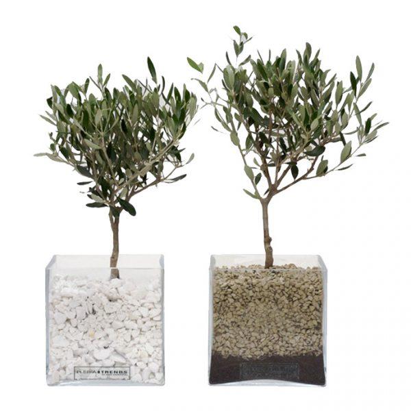 Glass Vase With Olive Tree And Gravel Fleria