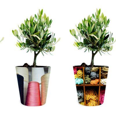 plants - φυτά ελια-olive tree how to plan-fleria corporate gift-εταιρικά δώρα greek aroma- άρωμα ελλάδας3 handmade pots